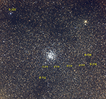 M11 labeled image